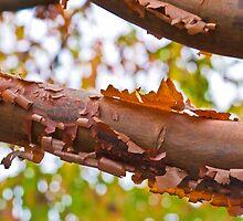 Autumn is on us by Nala
