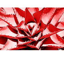 Red Cactus Photographic Print