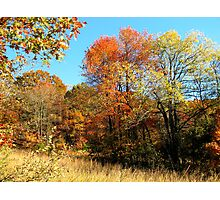 Golden Field, Bold Autumn Colors Photographic Print