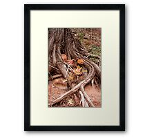 Strong roots, a good thing to have Framed Print