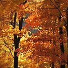 Flaming Autumn Forest by NatureGreeting Cards ccwri
