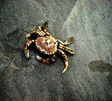 Swartriet crab by fourthangel