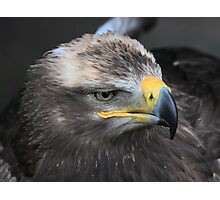 Steppe Eagle Photographic Print