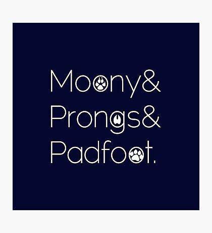Moony & Pongs & Padfoot Photographic Print