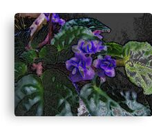 African Violet Art Study 2 Canvas Print