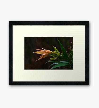 Beauty in the Bush Framed Print