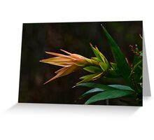 Beauty in the Bush Greeting Card