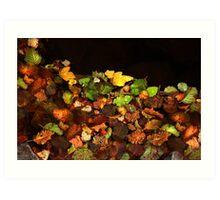 Floating Fall Colors Art Print