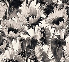 Sunflowers in Soft Sepia by micklyn