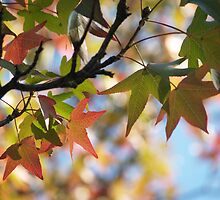 Sweetgum Leaves in October by Anna Lisa Yoder