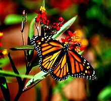 Fall Monarch by NatureRules