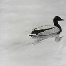 Mallard Duck by Will Vandenberg