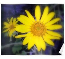 Blurred Daisies Poster