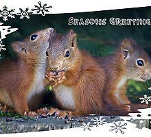 Seasonal Squirrels by Krys Bailey