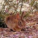 Rabbit In The Shade by R&PChristianDesign &Photography