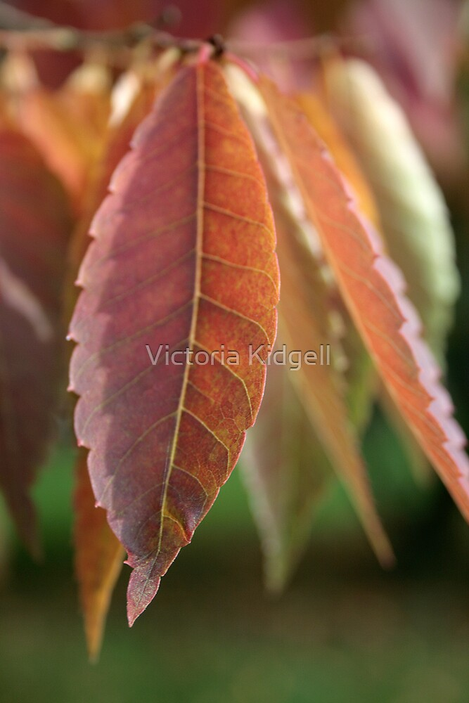 Leaf drops by Victoria Kidgell