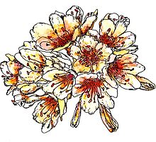 peach and orange flowers by salixpyrography