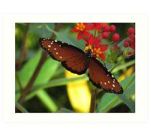 Butterfly Queen Monarch Brown Art Print