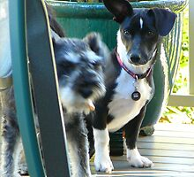 """JEDDA"" AT 5 MONTHS WITH HER NEXT DOOR PLAYMATE ""PEPPER"" by Ekascam"