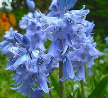 Blue is the colour... again! by newbeltane
