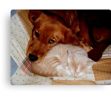 Best Buddies Wild Bill Hickock Kitten and Penelope Canvas Print