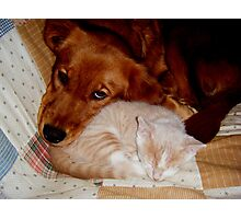 Best Buddies Wild Bill Hickock Kitten and Penelope Photographic Print