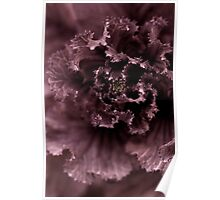Ornamental Cabbage #1 Poster