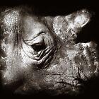 rhino by Rob Smith