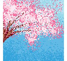 Pixel Sakura / Cherry Blossom Photographic Print