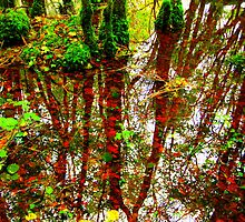 Reflections on Fallen Leaves by Honor Kyne