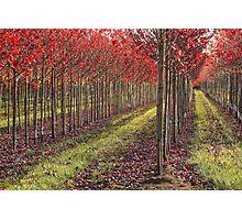 Tree Flames Photographic Print