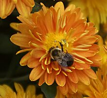 Happy Bumble Bee by Rick  Friedle