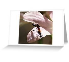 Stealth Wasp Greeting Card