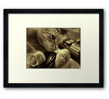 All Paws Framed Print