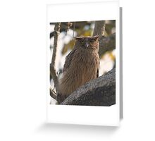 Brown Fish Owl Greeting Card