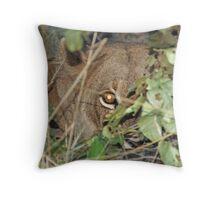 Lioness, Moremi Game Reserve, Botswana Throw Pillow