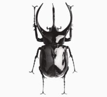 Black beetle by ghjura