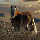 Mini in prairie grass by Normcar