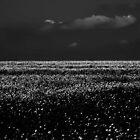 The Rape Field in B&W......... by Imi Koetz