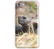 Gopher Tortoise iPhone Case/Skin
