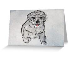 Puppy, Lab, Dog, Animal Greeting Card