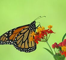 Monarch in Green by Donna Adamski