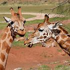 Gossiping Over Lunch by Jenny Brice