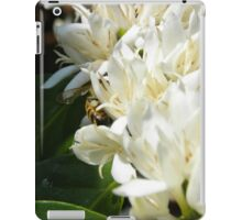 Portfolio: Honeybee worker foraging on Hawaiian Kona coffee bloom #3 , Big Island, Hawaii iPad Case/Skin