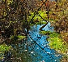 STREAM IN LATE AUTUMN by RGHunt