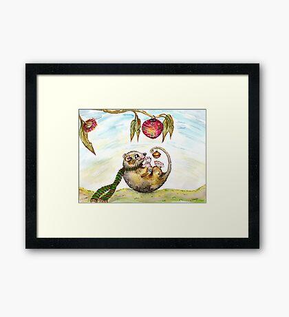 Jingle Possum Bells Framed Print