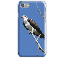 Osprey on the Lookout iPhone Case/Skin