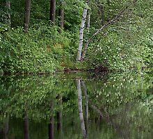 The lone Birch - Nashua River, Nashua New Hampshire by Scott Englund