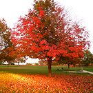 Colors Leaves and Love by Tracy Jule