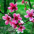 peach blossums by LoreLeft27
